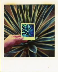 untitled, hand + cactus by mgilpin
