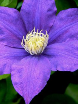Purple flower of awesome I by Beccadinasour