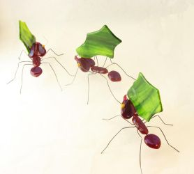 Fused Glass Leaf-Cutter Ants by trilobiteglassworks