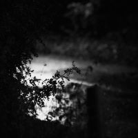 Nocturnal by StephanePellennec