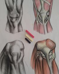 Anatomy_study_JAM by Jamesonarts