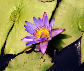 Beauty in the Water by SheilaMBrinson