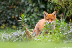 Hiding by Alannah-Hawker