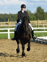 Friesian dressage by wakedeadman