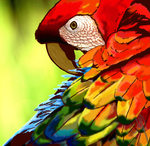 Camelot Macaw by Avajes