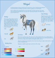 Winged: Breed Sheet by NightimeMare