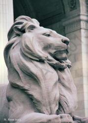 Lion at the New York Public Library by magicmeg8