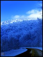 Roan Mountain, Tennessee 50 by XpiecemealX