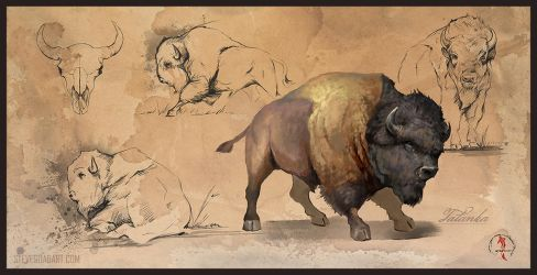 Tatanka Study Sheet by stevegoad