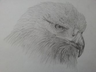 Golden Eagle by Stoned-And-Drunk