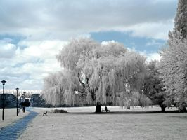 Serenity in Infrared by ilimel