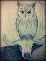 Quick Owl and Animal Skull drawing by elegy01