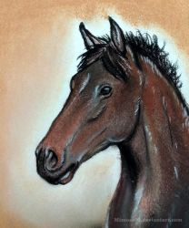 Horse Portrait by Mimose91