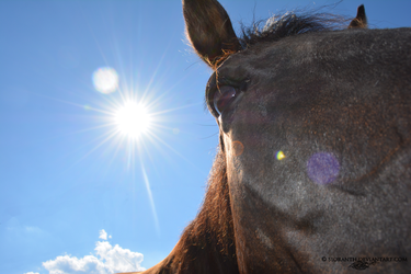 Equine Expressions - Remiel in the Sun by sioranth