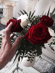 red roses by InsanityPants