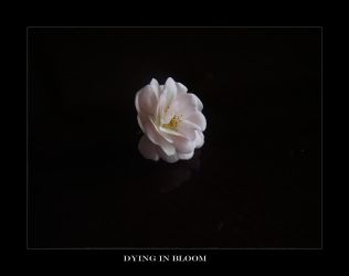 Dying In Bloom by implosin