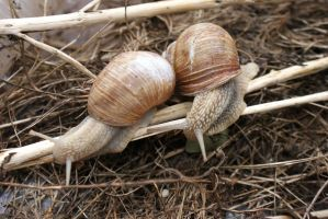 Snails by Kitty1205