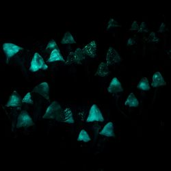 My Glow In The Dark Shrooms by falauke