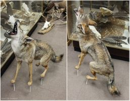Howl It Out (2) by WeirdCityTaxidermy