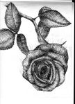 a rose is... by GraphicDensity