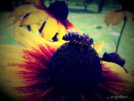 Summer Flower + Bee 2012 - 16 by Ingnition
