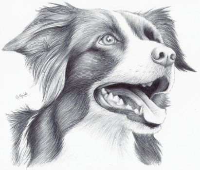Border Collie by icepaw99
