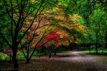 Autumn Gardens Pathway, Queen's Wood by Penson37
