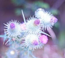 Thistles in the wind by pqphotography