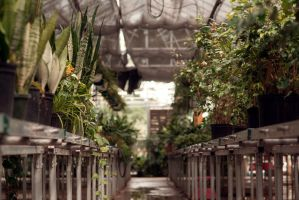 Greenhouse by inspired-impressions