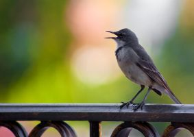 My chirpy visitor by MMINC