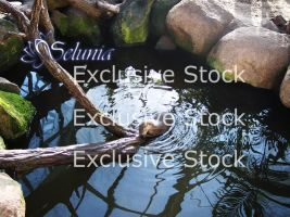 Exclusive Stock :: Otter Package by Selunia