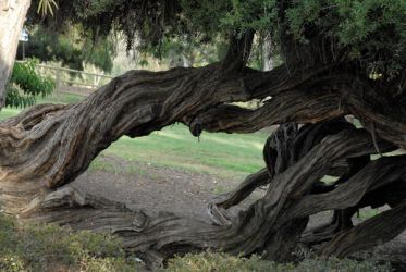 Twisted Trees 05 by LinzStock