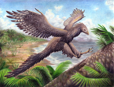 Archaeopteryx - Landing by EWilloughby
