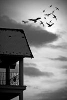 fly away_2 by adrian-mladin