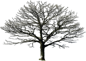 bare tree PNG by DoloresMinette