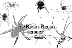 spiders brush by anaRasha-stock