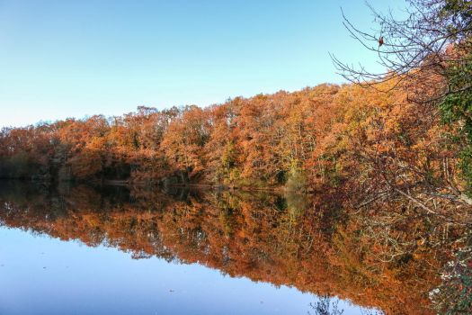 Autumn reflections I by SP4RTI4TE