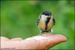 A Bird In The Hand. by andy-j-s