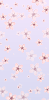 Cherry Blossoms Background (F2U!) by DominickLuhr