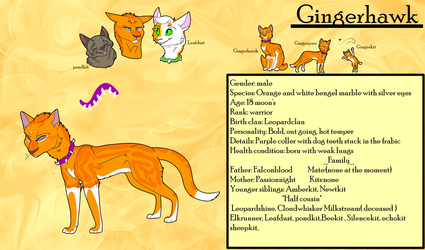 Gingerhawk ref 2018 by SolinTheDragon