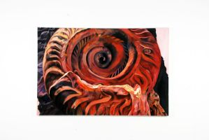 Ammonite on Rock by boriales