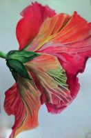 Watercolor Hibiscus by The-Witchy-Artist