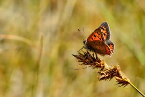 Summer butterfly by Witoldhippie