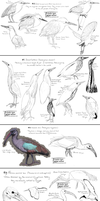 A bird species a day - Week 3 by namu-the-orca