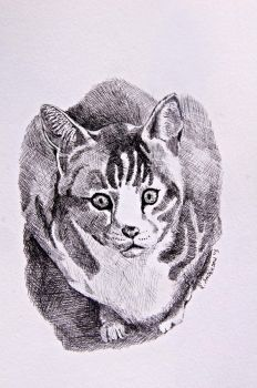 Stray Cat [Black and White Pen] by patchesthepheonix