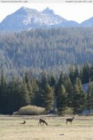 Tuolumne Meadows 6 by RoonToo