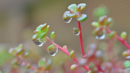 Drops on leaves by GabrielM1968