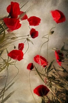 composition with some poppies by Floriandra