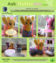 Ask Brushable Fluttershy - Q5 - Pony Meme by dutchscout