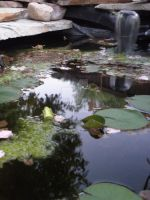 Backyard Pond by Nullibicity